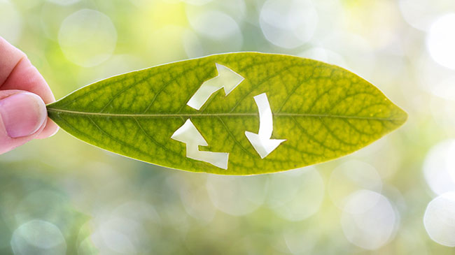 how-to-turn-your-business-green-without-breaking-the-bank